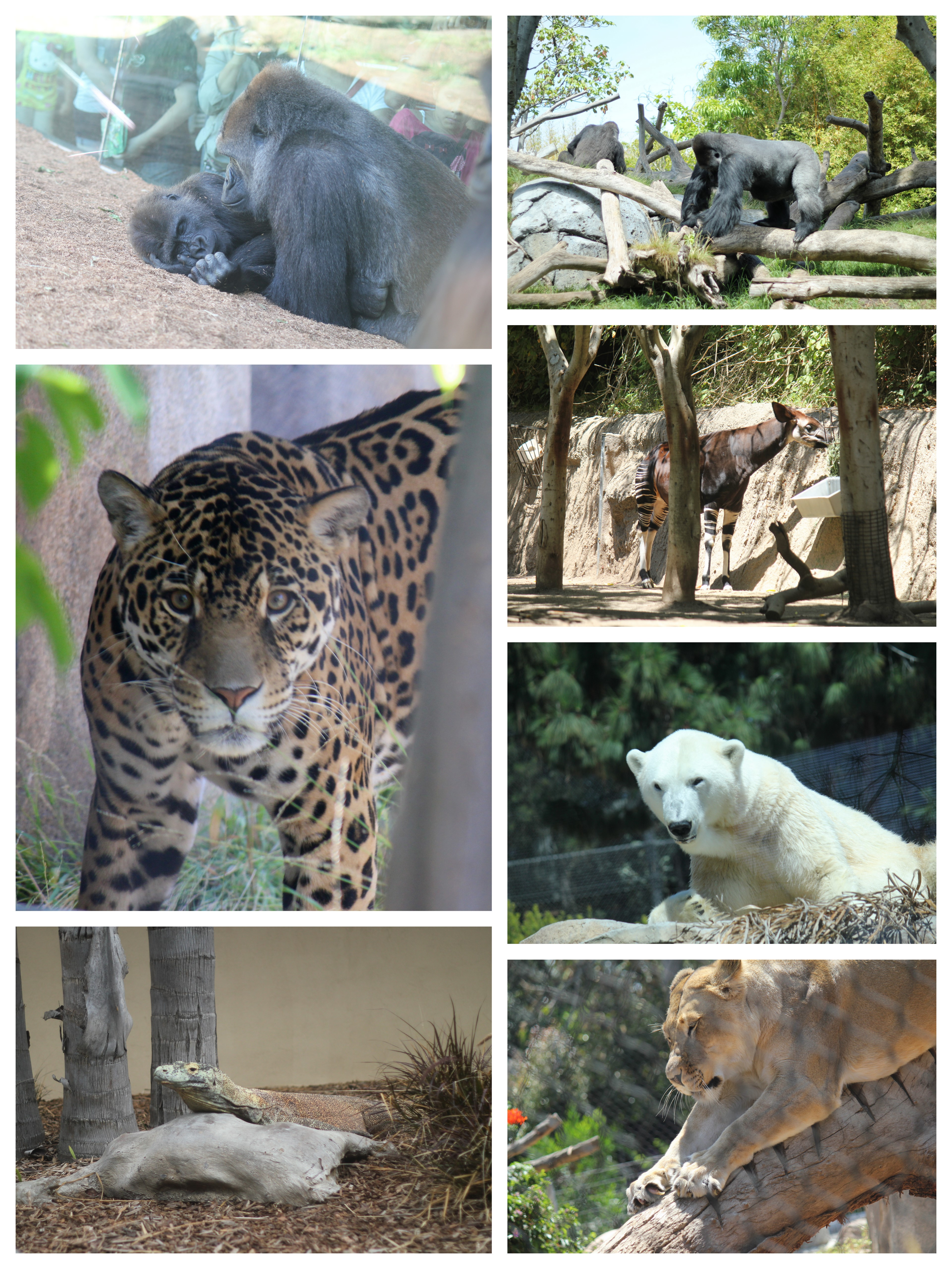 san diego zoo�a southern california must see and kids
