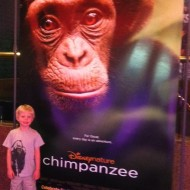 Disneynature's Chimpanzee Review & Activities Downloads #MeetOscar