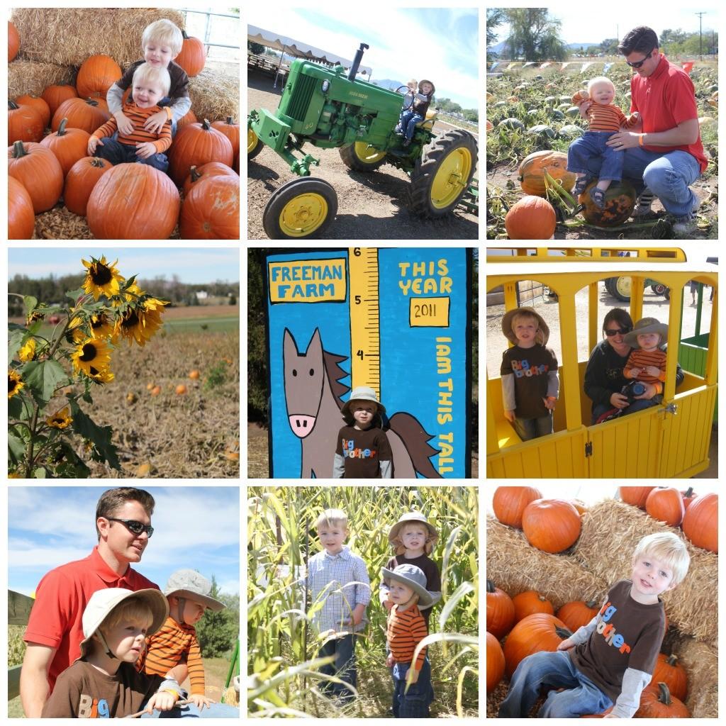 Arizona families: marana pumpkin patch full of family fun.