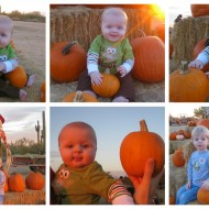 MacDonald's Ranch in Scottsdale – Two for One Pumpkin Patch Admission Deal!