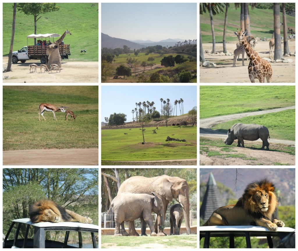 San Diego Zoo, Wild Animal Park