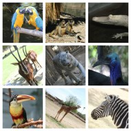 Arizona's Wildlife World Zoo – Discount Coupon {Travel Tuesday}