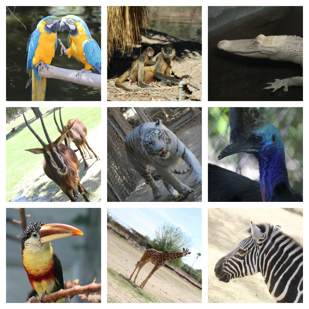 Wildlife World Zoo