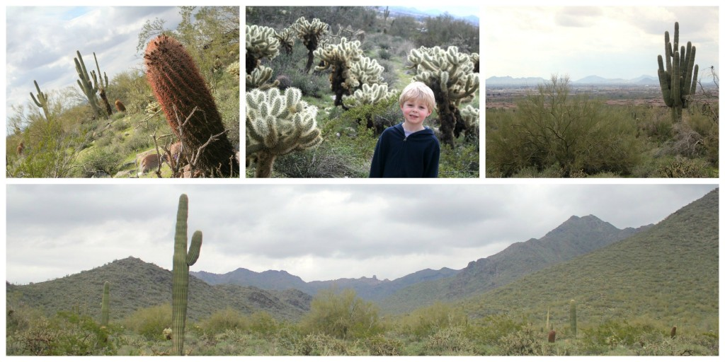 McDowell Mountains