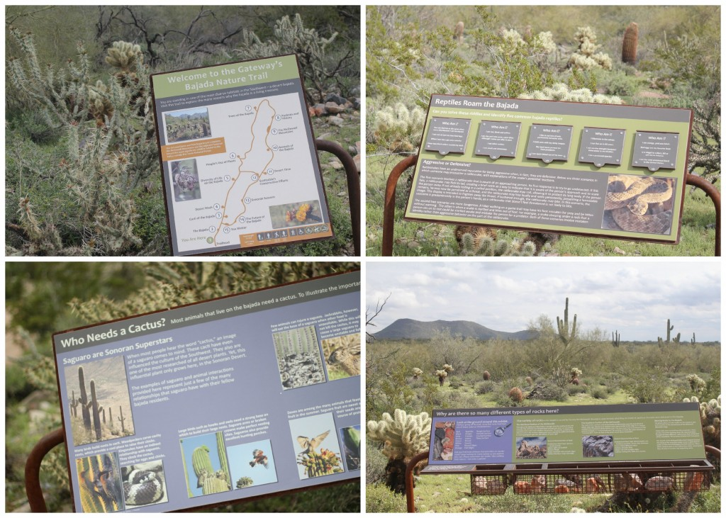 Scottsdale Nature Trail