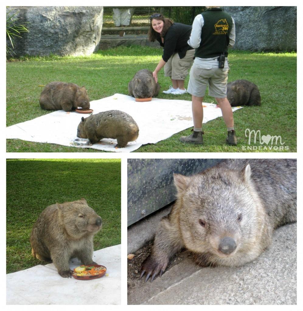 Australia Zoo Wombats