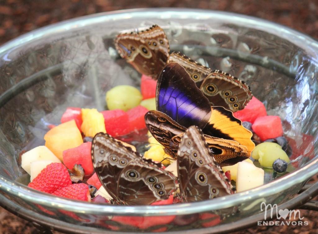 Butterflies on fruit