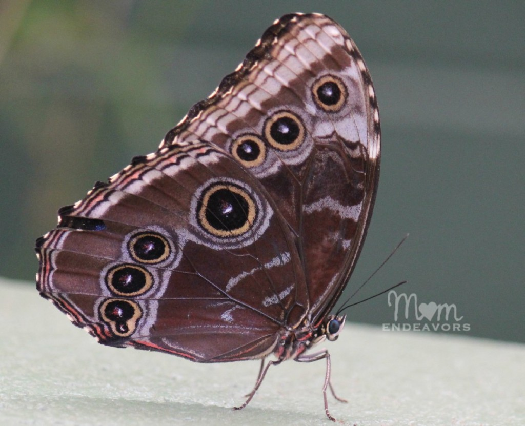 Butterfly Closeup