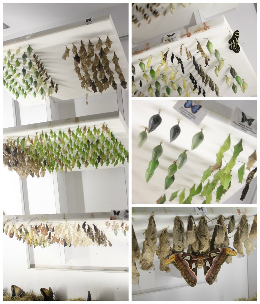 Butterfly Emergence Gallery
