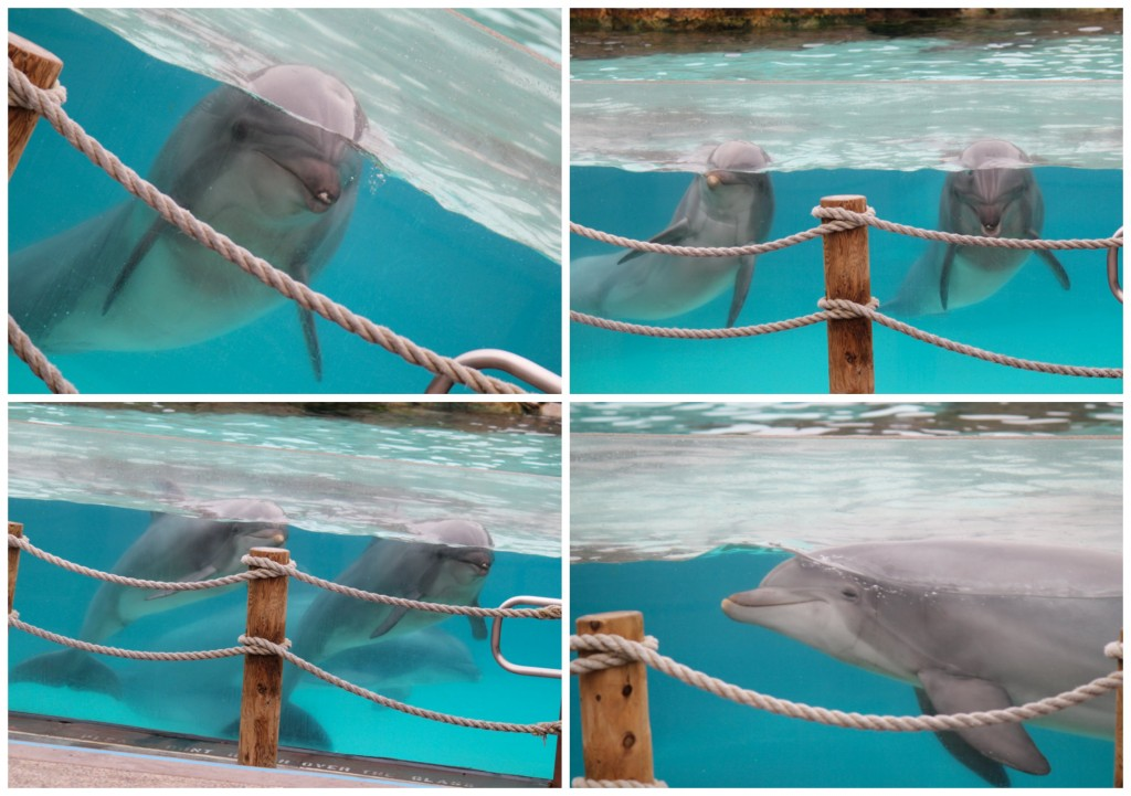 Dolphins at Sea World San Diego