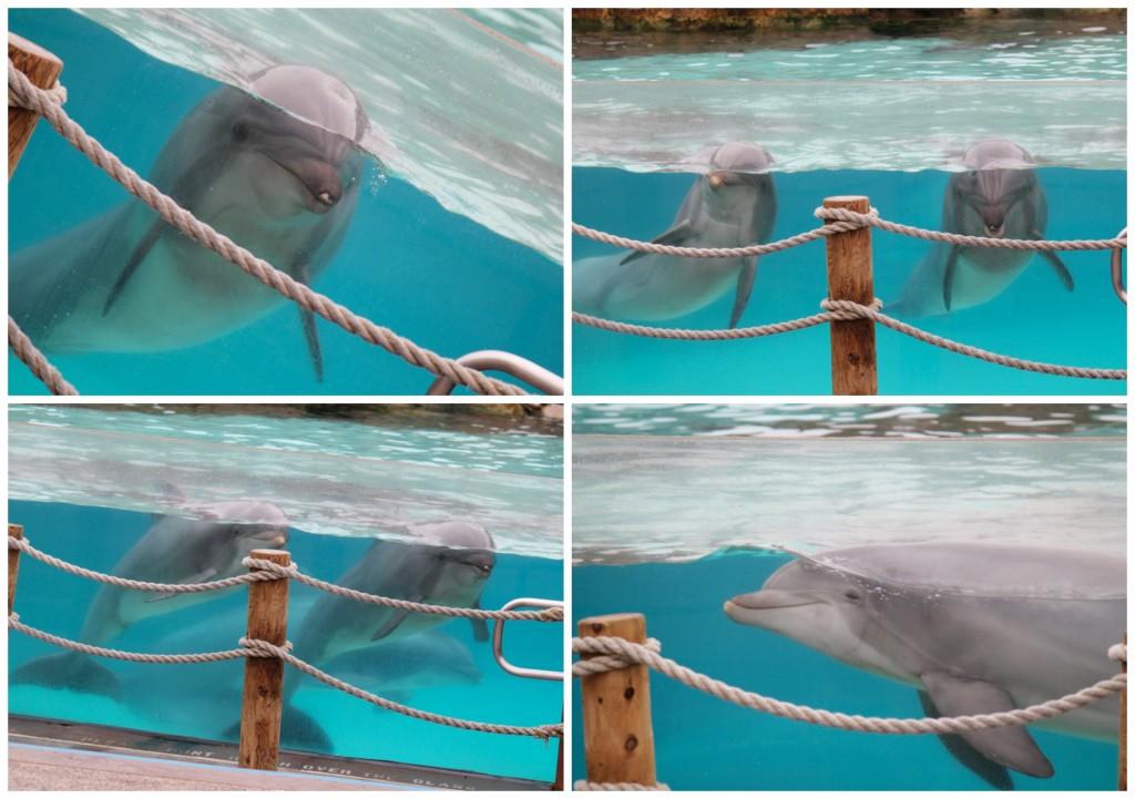 Dolphins at Sea World San Diego