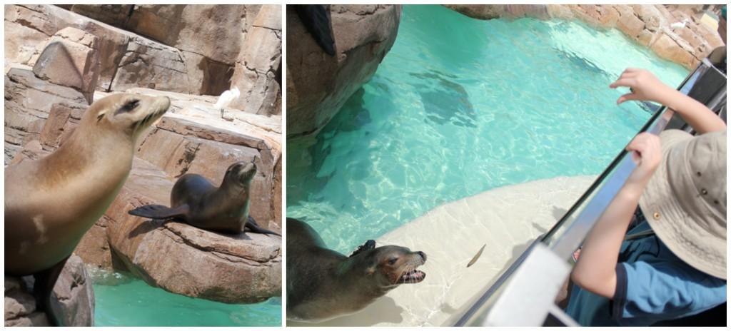 Feeding Sea Lions