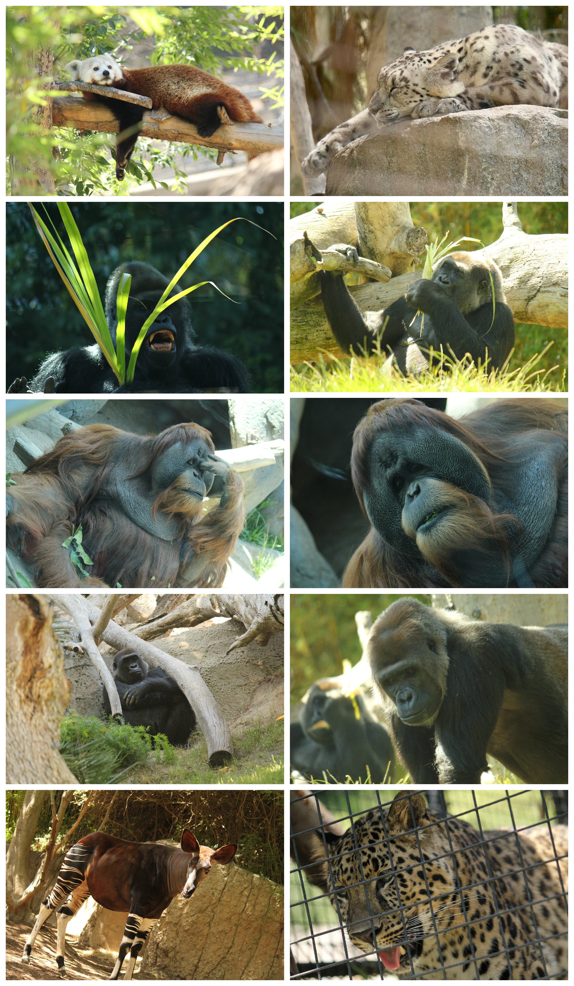 australian outback at the san diego zoo travel tuesday
