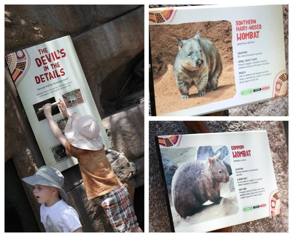 San Diego Zoo Wombats