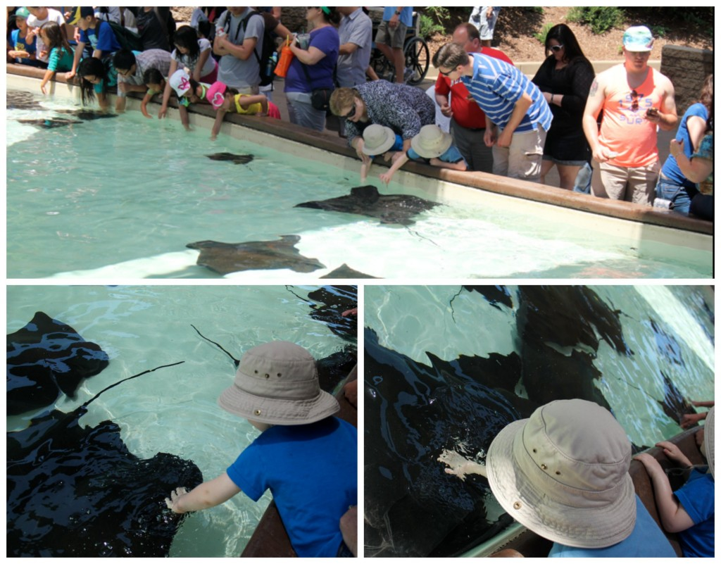 Stingray touch tank at Sea World San Diego