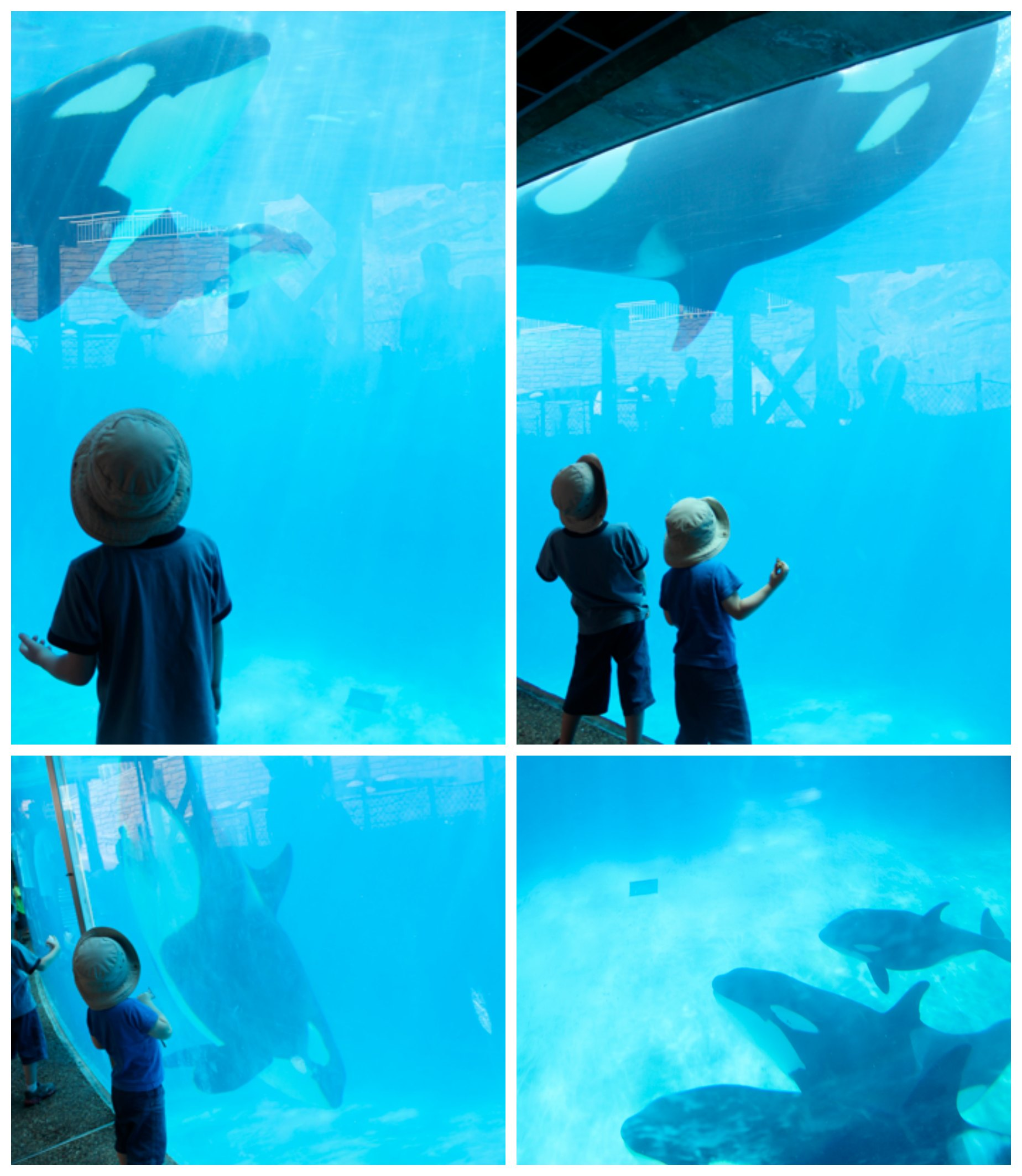Underwater Shamu Viewing