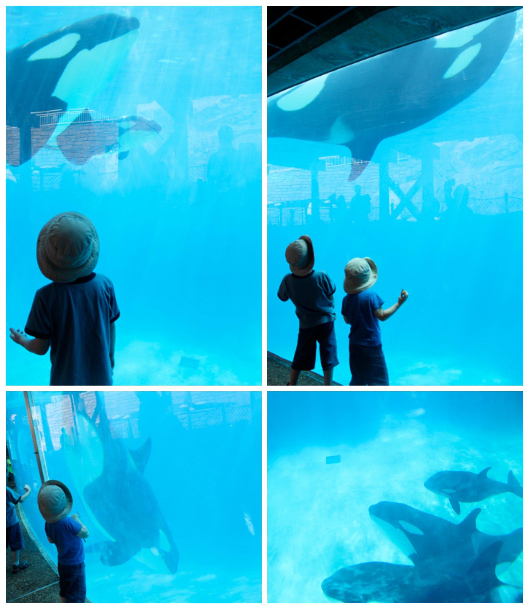 Underwater Shamu Viewing