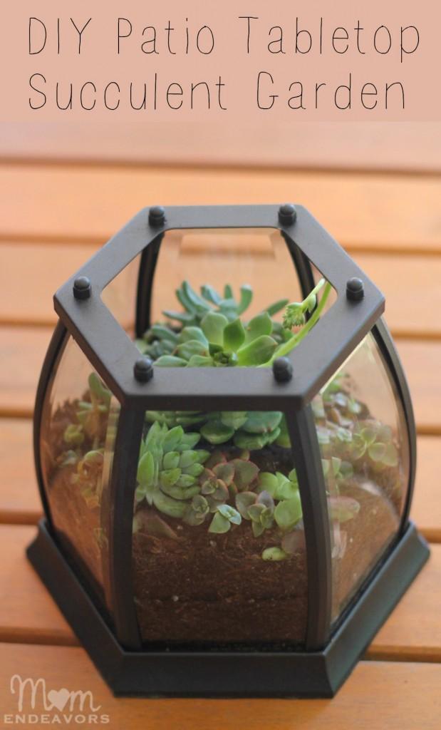 DIY Patio Tabletop Succulent Garden