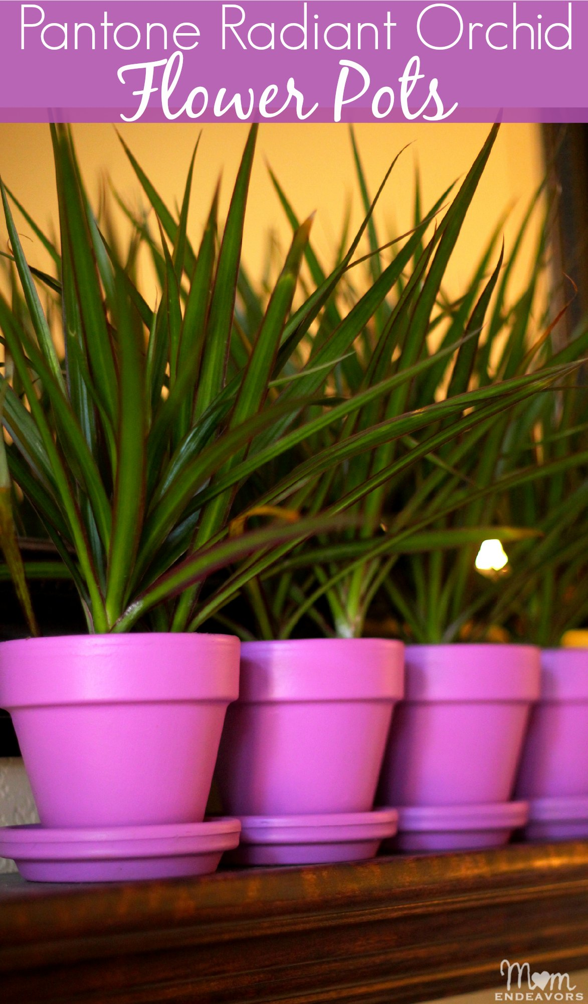 Pantone Color of the Year Radiant Orchid Flower Pots