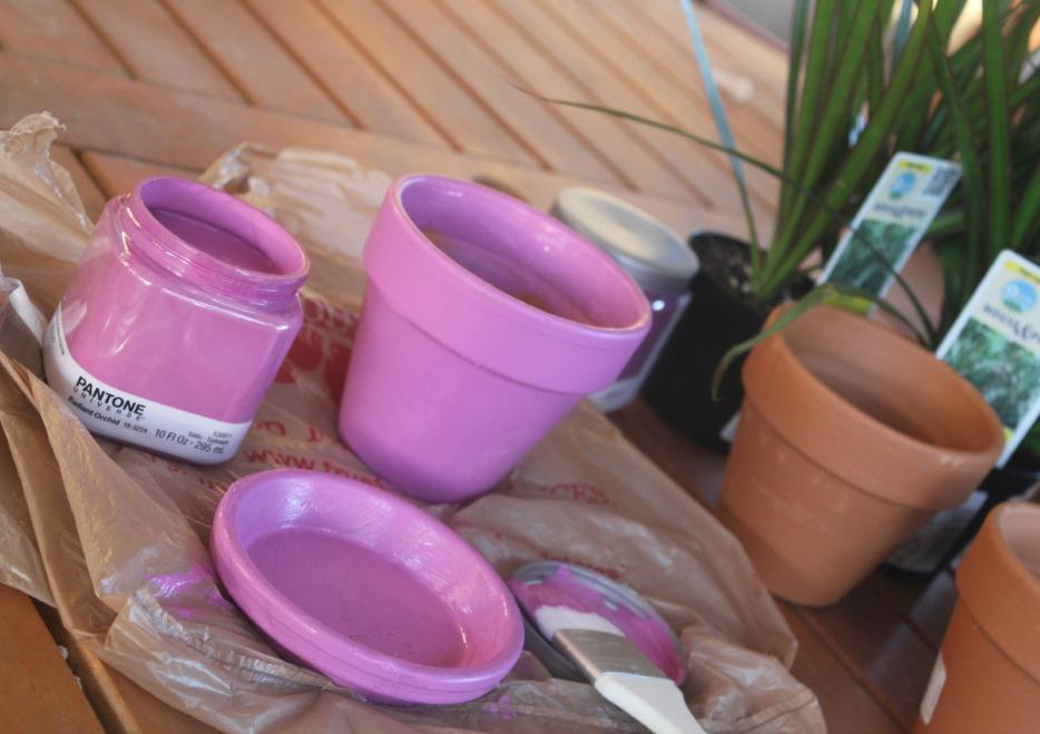 Radiant orchid flower pots
