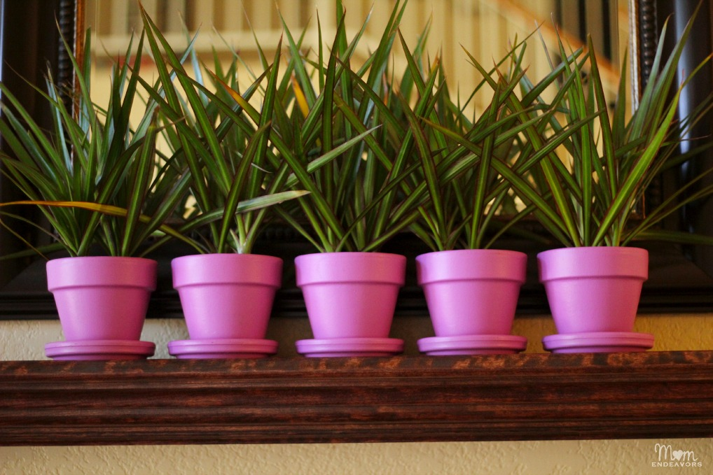Spring House plants