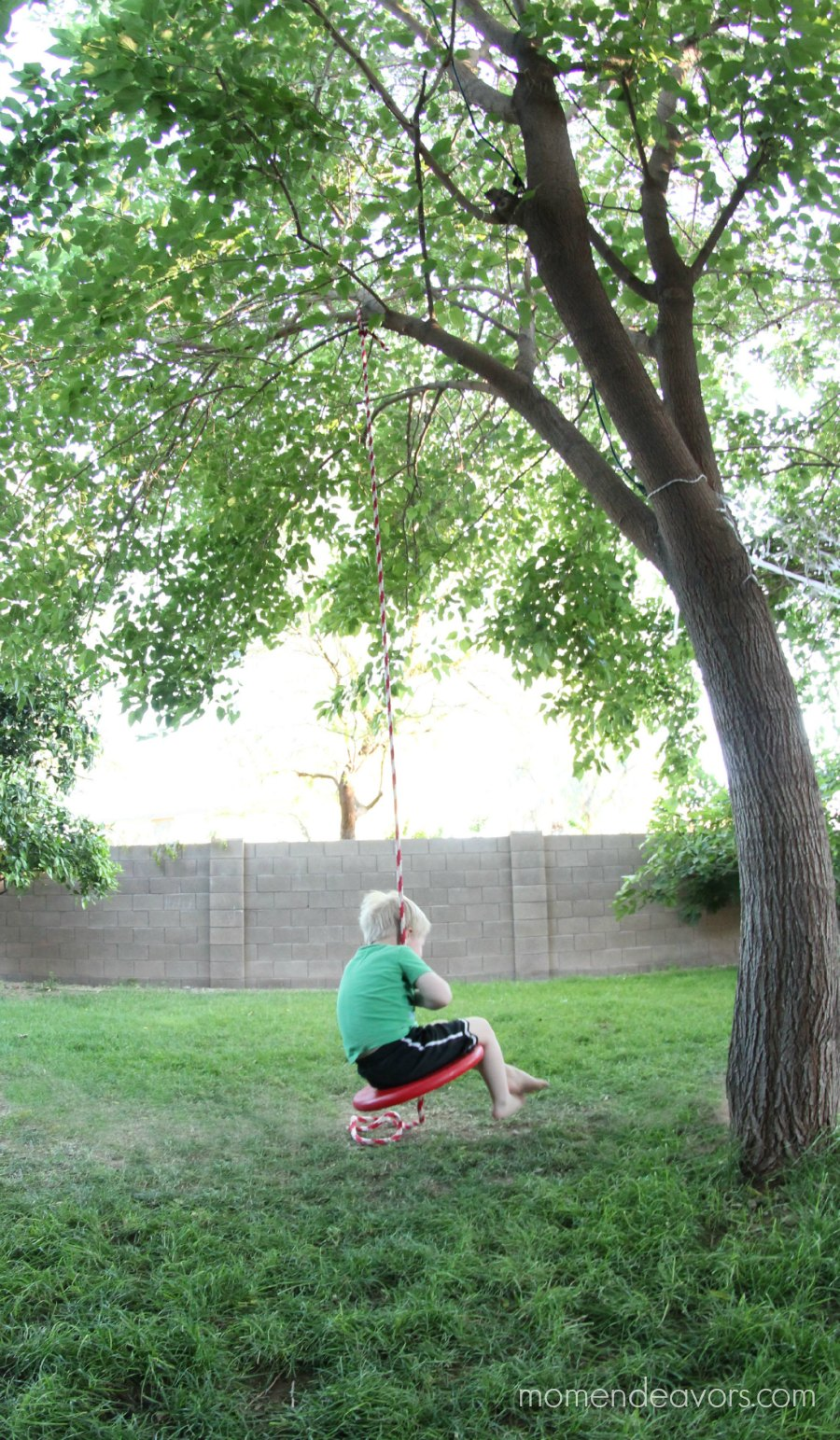 Single Rope Tree Swing