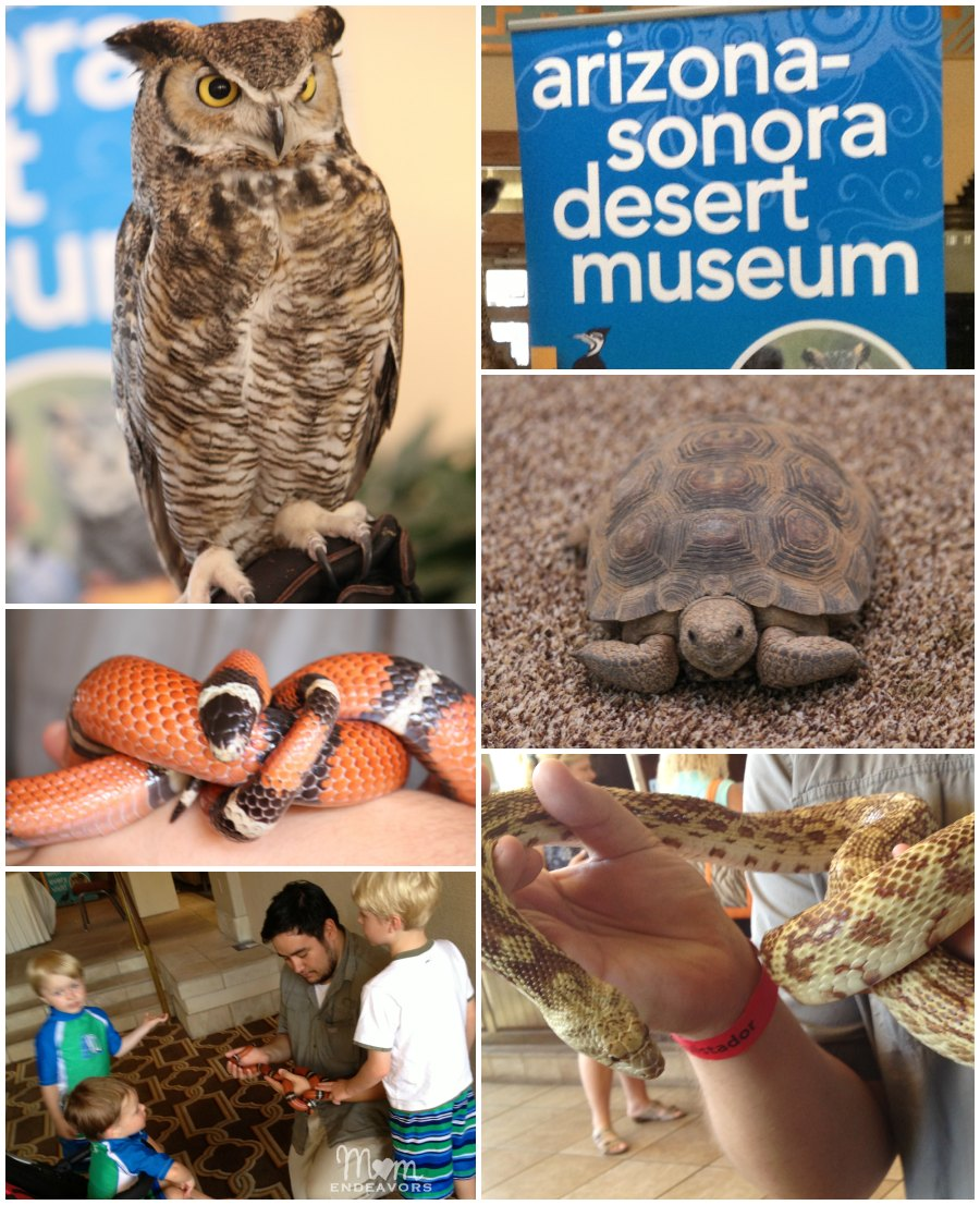 Arizona-Sonora Desert Museum at Hilton Tucson