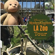 LA Zoo Trip for Disneynature's Monkey Kingdom #MonkeyKingdom