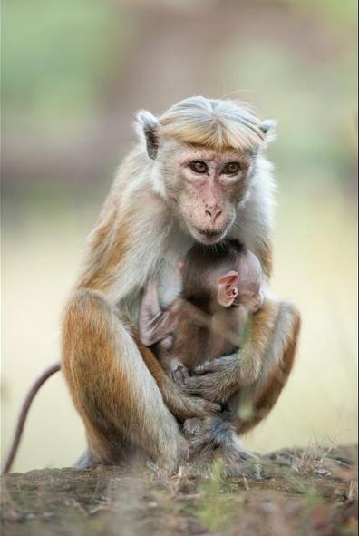Maya & Kip Monkey Kingdom