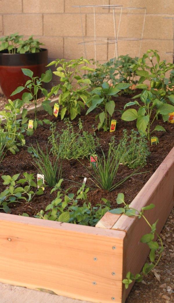 DIY Raised-Bed Garden