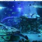 Arizona Sea Life Aquarium Phoenix