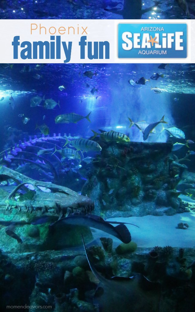 Arizona Sea Life Aquarium Phoenix