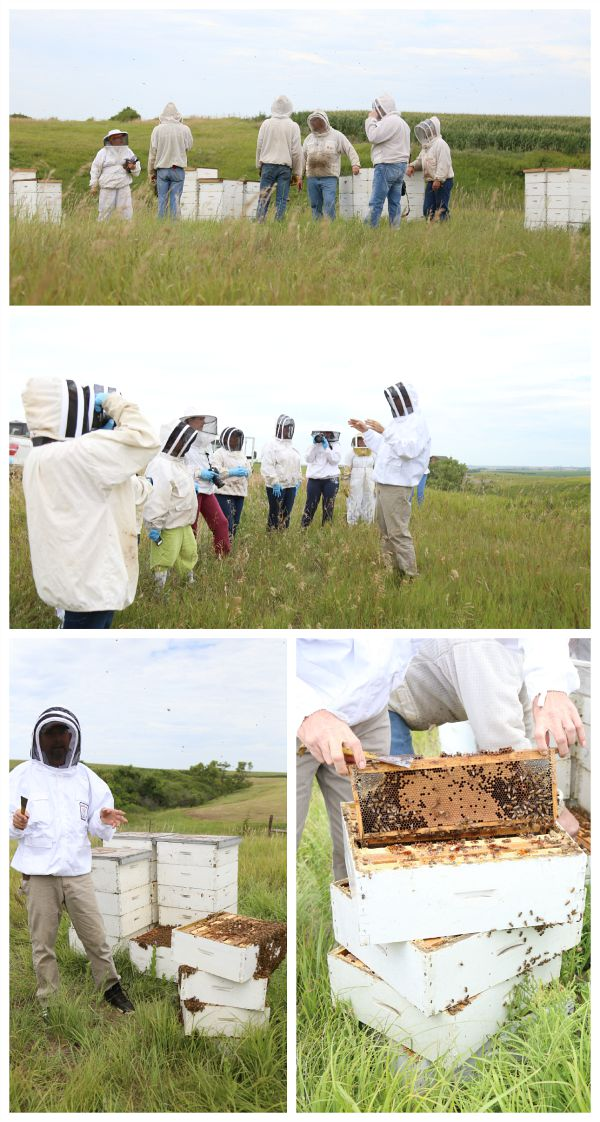 Hollmann Apiaries South Dakota