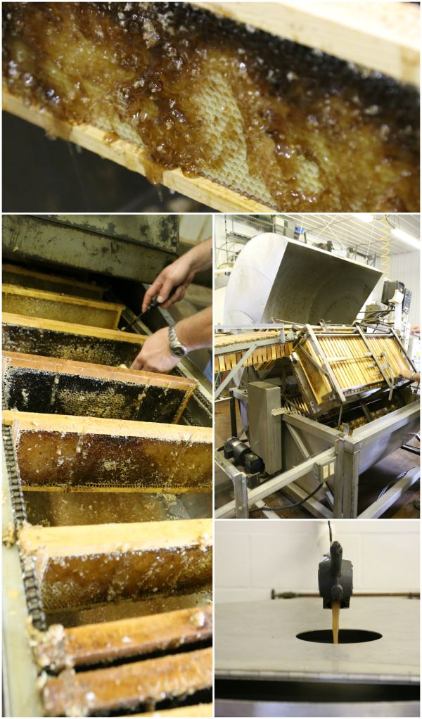 Honey extracting