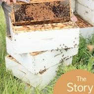 25+ Delicious Honey Recipes + The Story of Honey