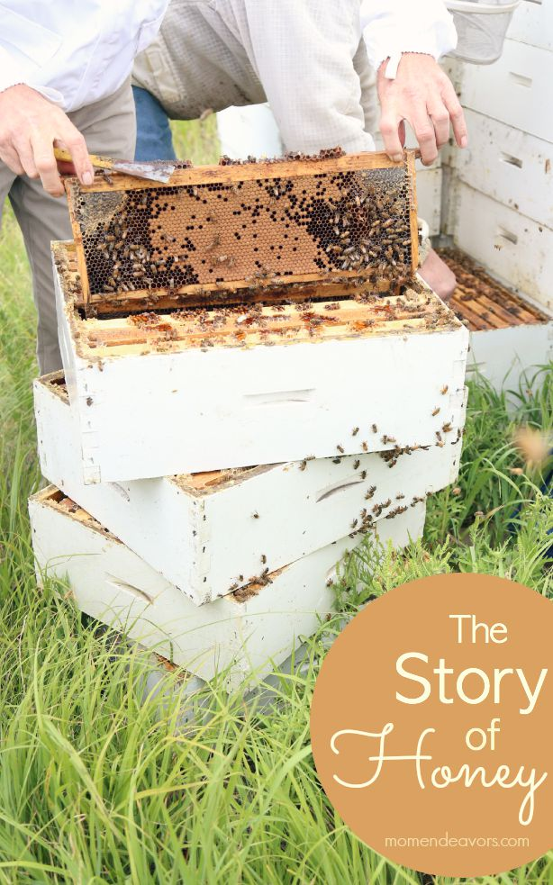 The Story of Honey #StoryofHoney