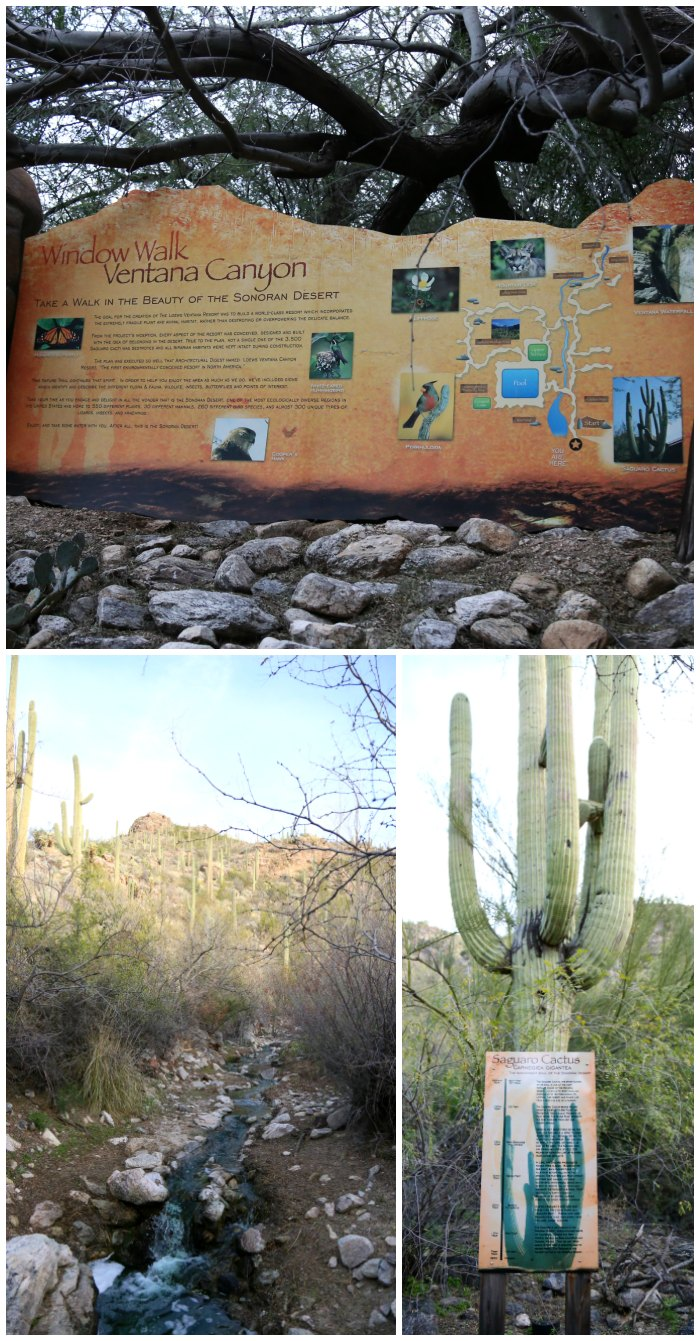 Nature Walk Ventana Canyon