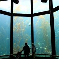Finding Dory at the Monterey Bay Aquarium