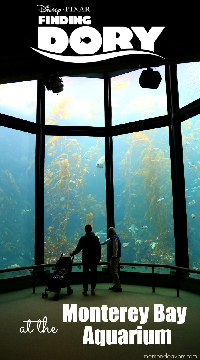 Finding Dory at Monterey Bay Aquarium