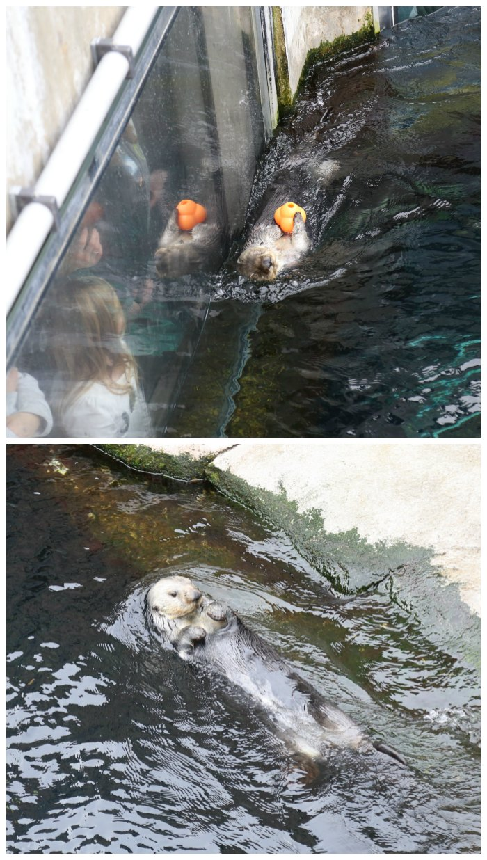 Sea Otters at Monterey