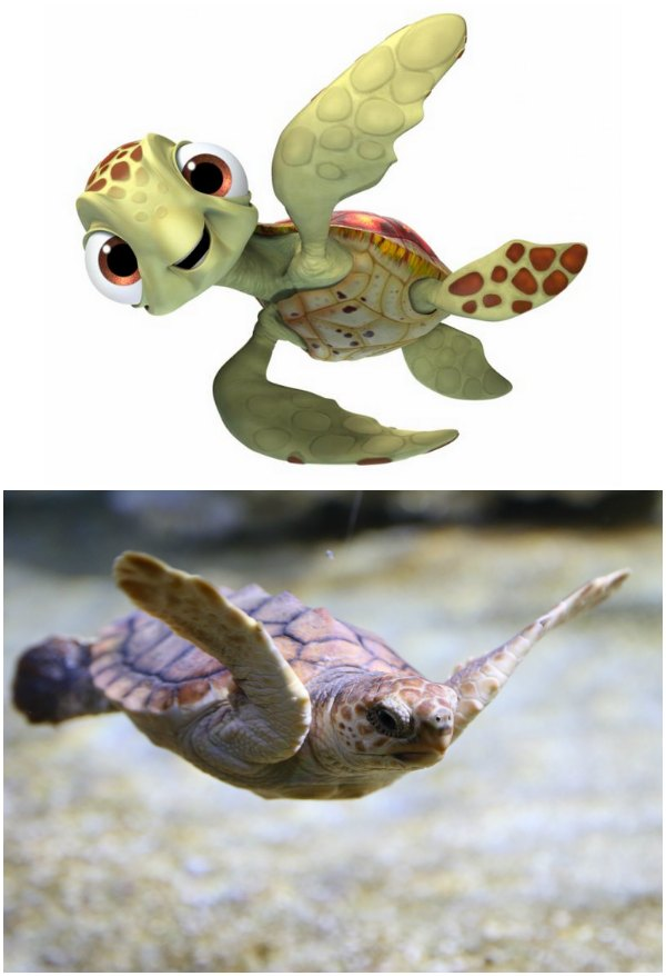 finding-nemo-squirt-pictures