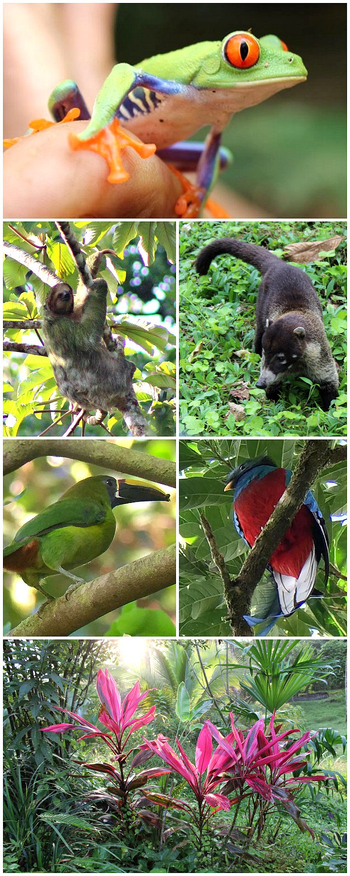 Costa Rica Wildlife