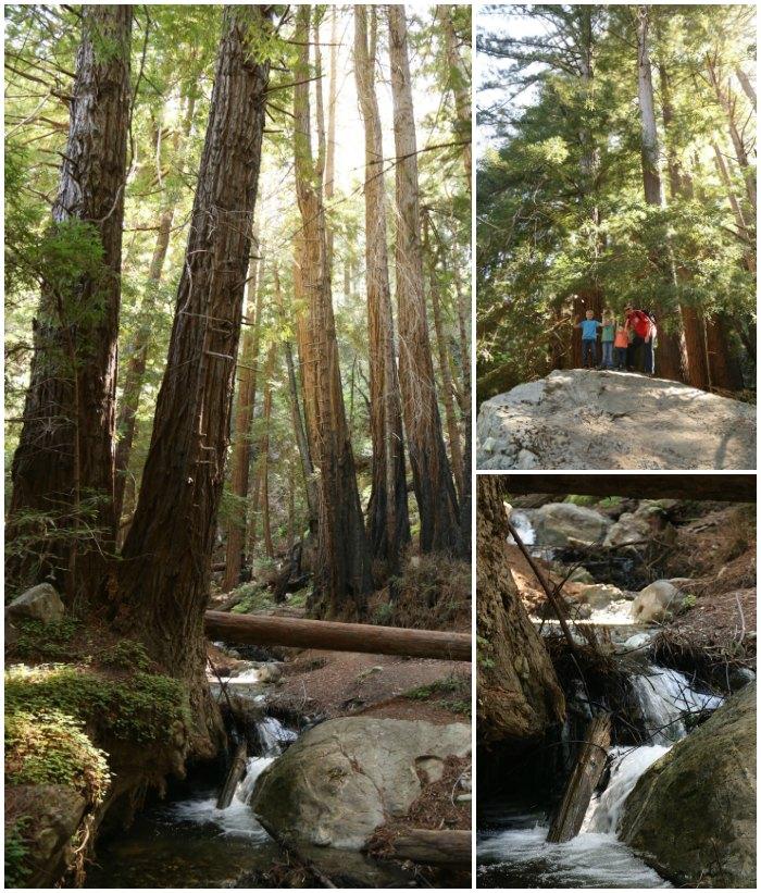 Ewoldsen Trail Julia Pfeiffer State Park