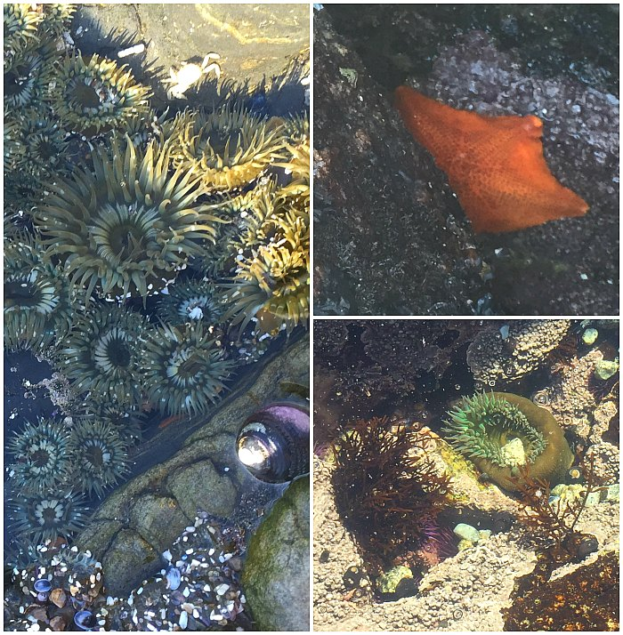 Monterey Tide Pools