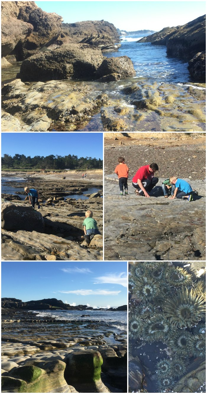 Tidepooling at Point Lobos