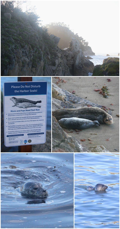 Whaler's Cove Harbor Seals