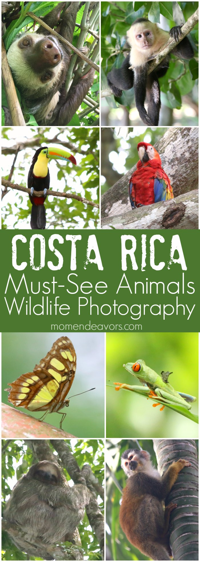 Costa Rica Must See Animals Wildlife Photography