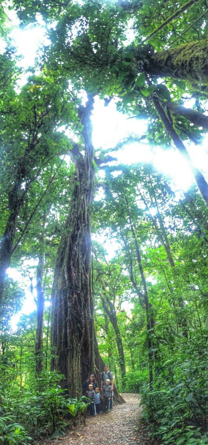 Strangler Fig Monteverde
