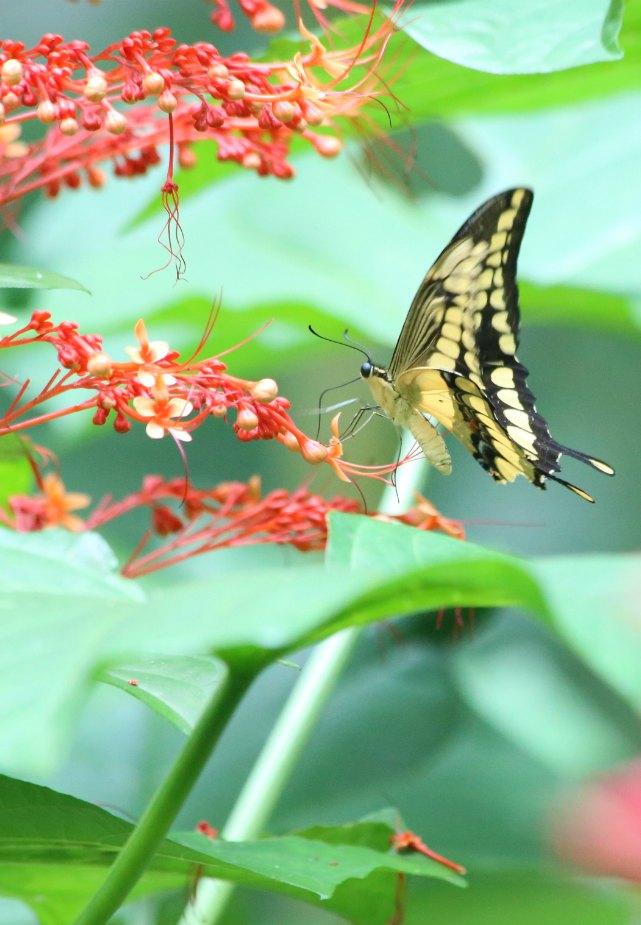 Costa Rica Flora Fauna