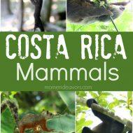Costa Rica Must-See Mammals Wildlife Photography